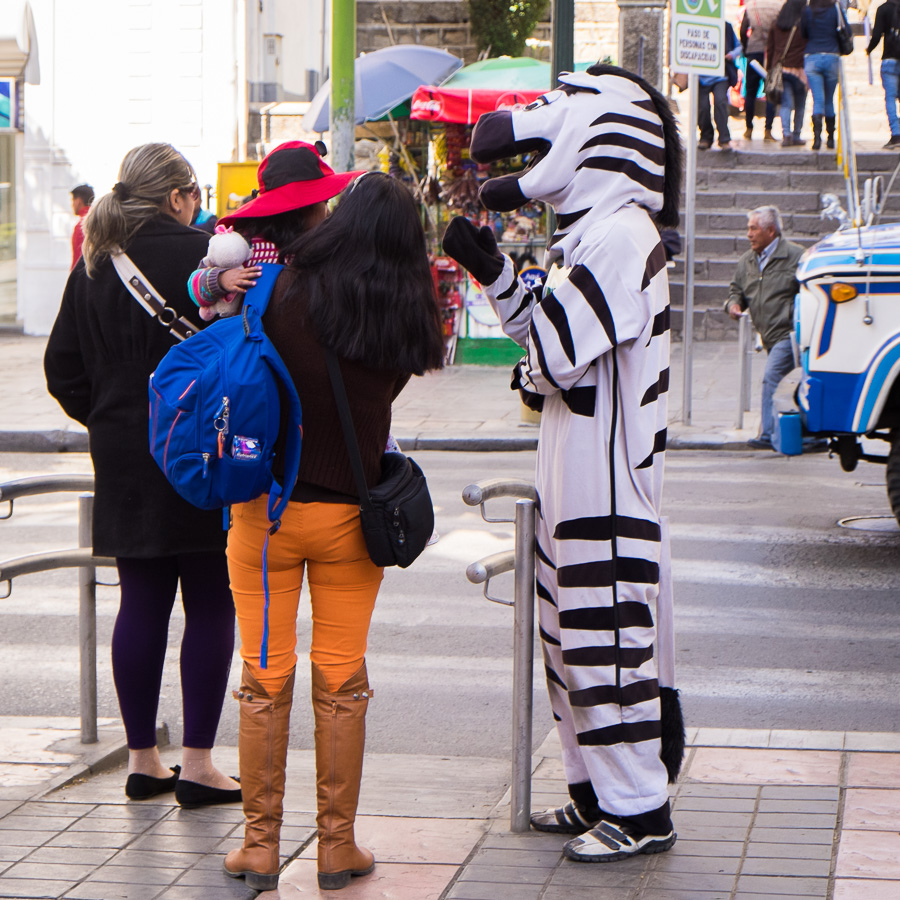 zebras de La Paz - interacting with locals
