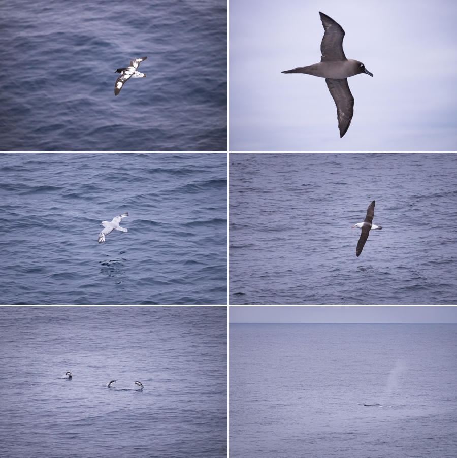 Drake Passage bird sightings