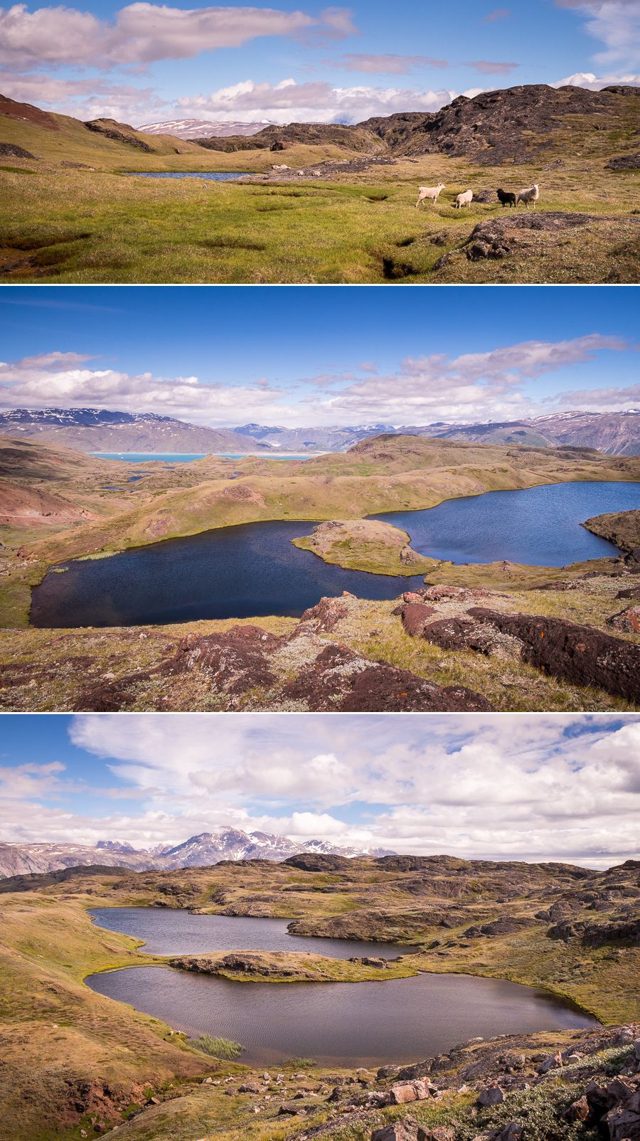 Views of different lakes and sheep while hiking from Sillisit to Qassiarsuk via Nunataaq in South Greenland