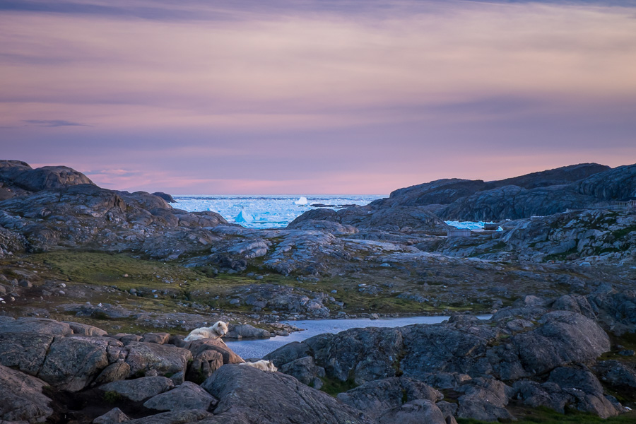 Vibrant pink skies, icebergs and 2 Greenland sled dogs as seen from the living room window of the Kulusuk Hostel in East Greenland.