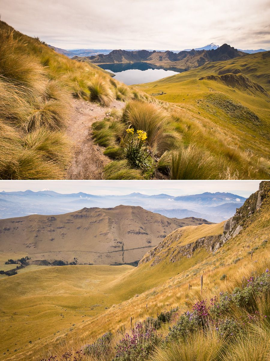 Wildflowers and Paramo scenery while hiking to the summit of Fuya Fuya near Otavalo, Ecuador