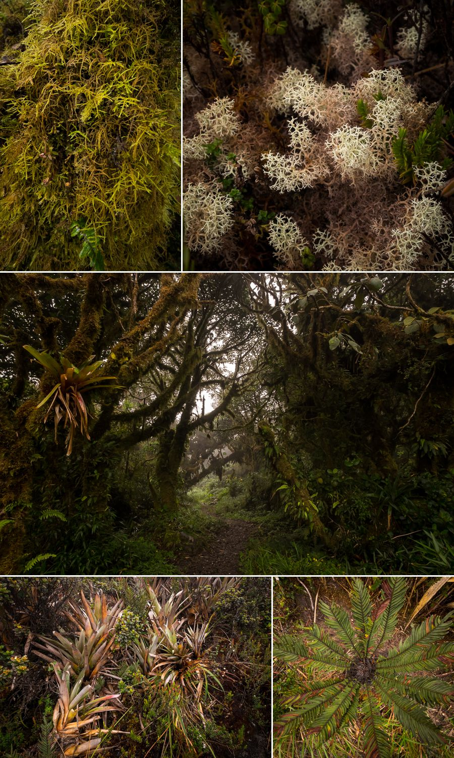 Various plants on los Miradores hike in the Podocarpus National Park near Loja, Ecuador
