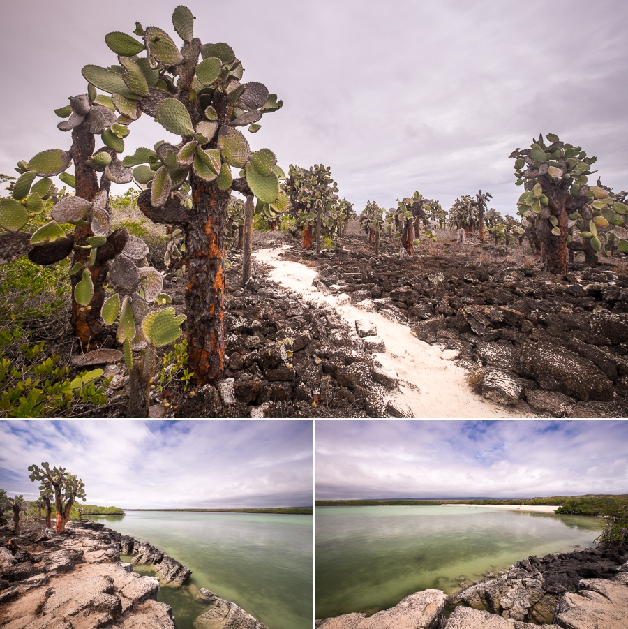 Views and vegetation from cliff at the end of Playa Mansa on Santa Cruz Island, Galapagos