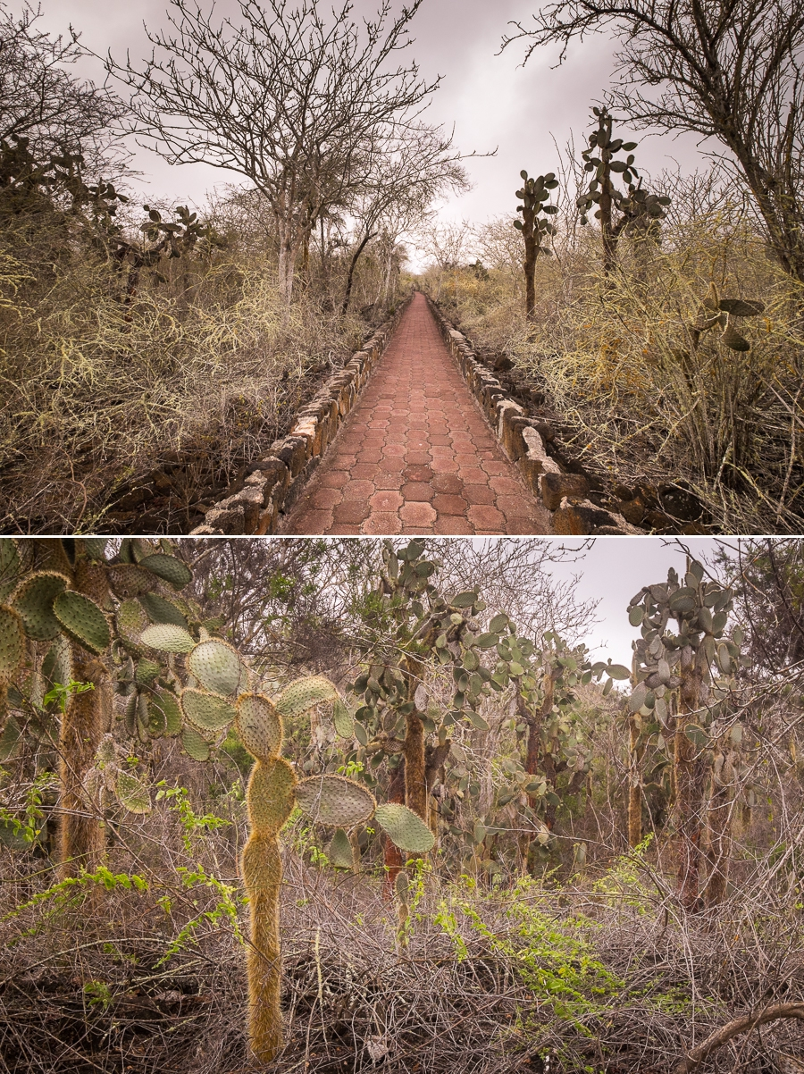 Path and vegetation that leads the way to Tortuga Bay on Santa Cruz Island, Galapagos