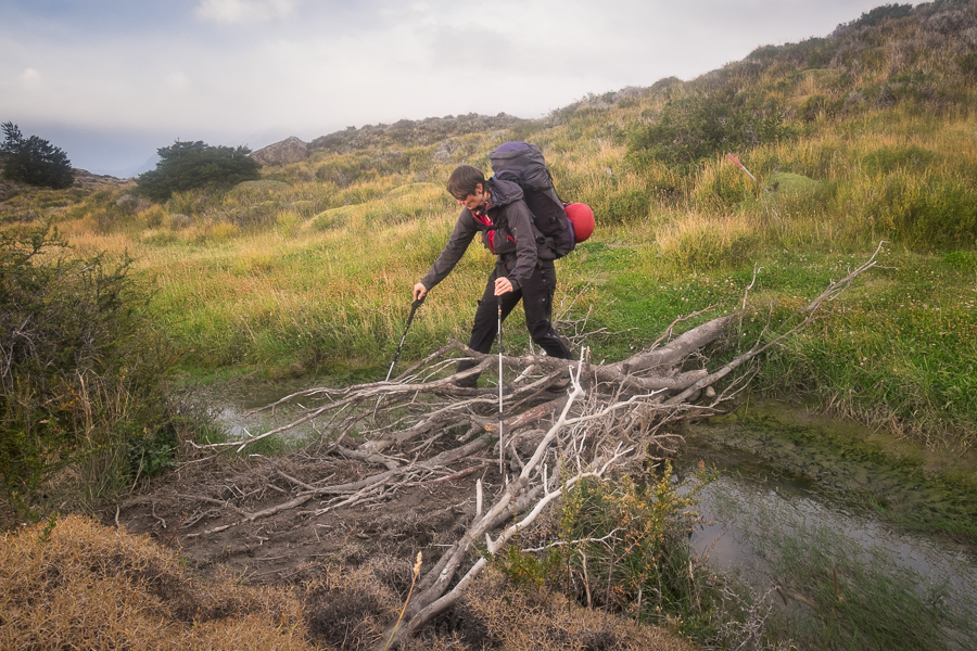 Negotiating the swampy bits - South Patagonia Icefield Expedition - Argentina
