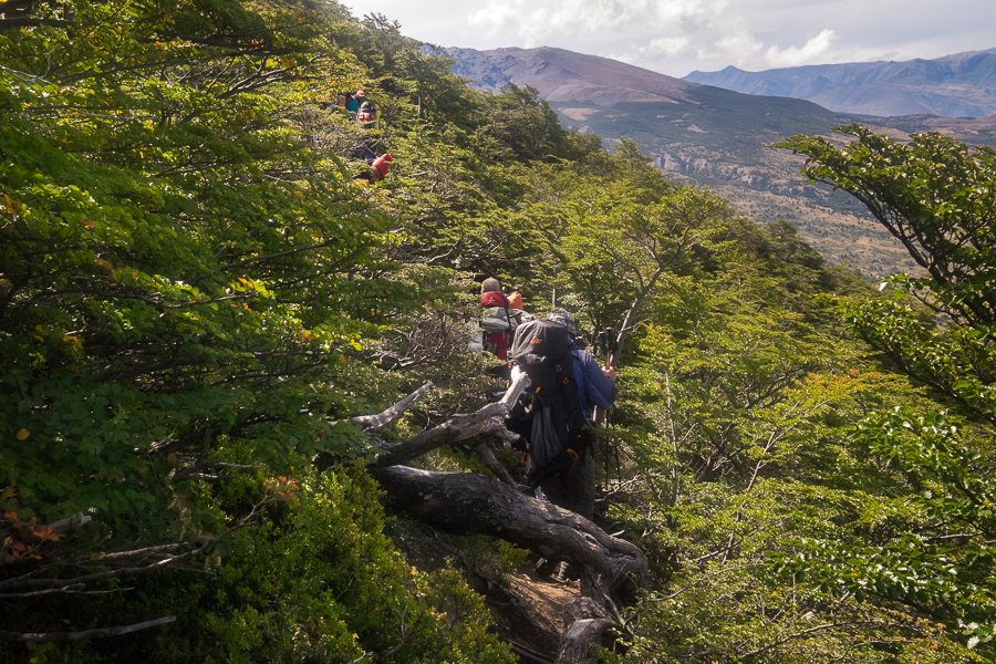 Battling the Lenga Forest - South Patagonia Icefield Expedition - Argentina