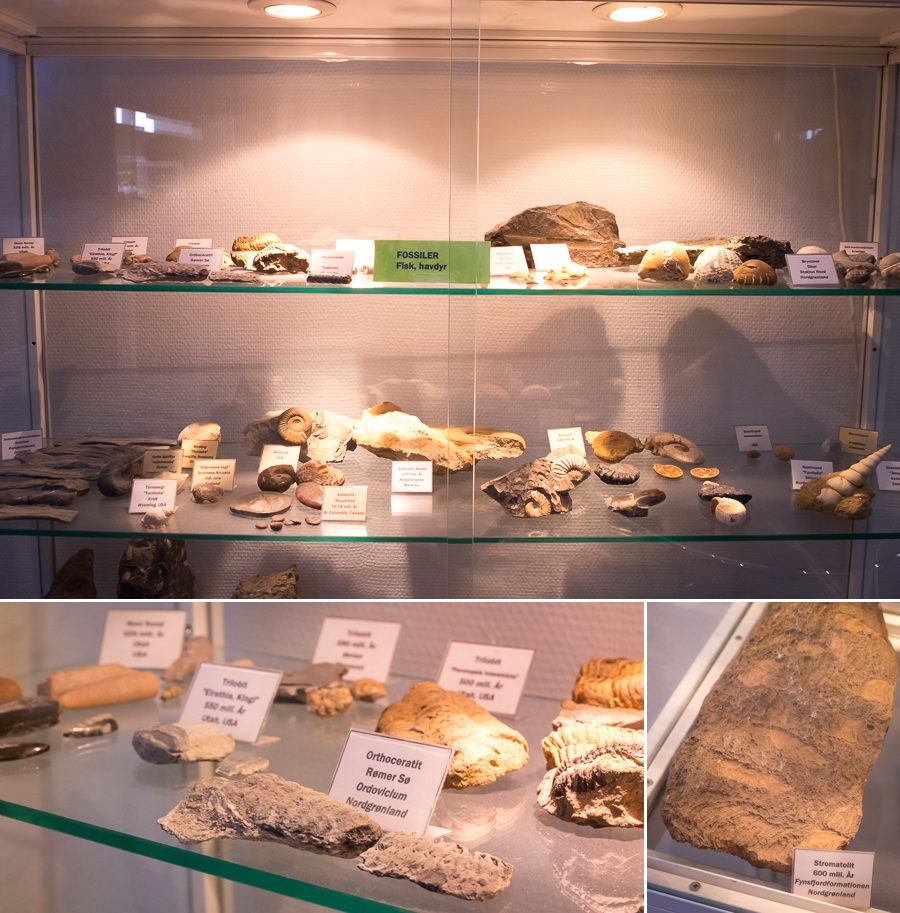Display case of fossils at the rock and mineral collection in Sisimiut, West Greenland