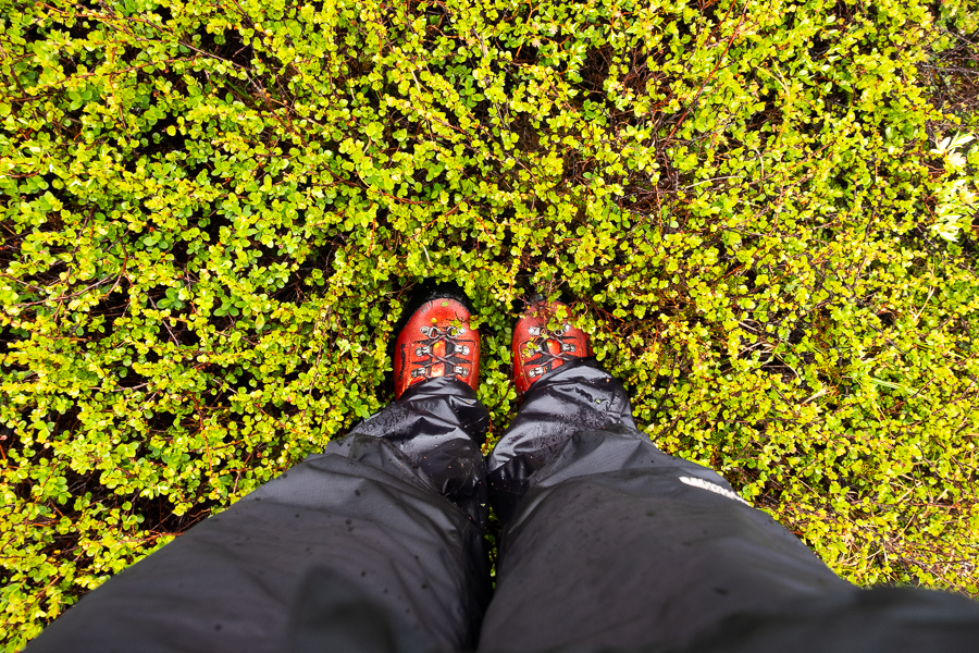 Boots, rain pants and wet vegetation in East Greenland