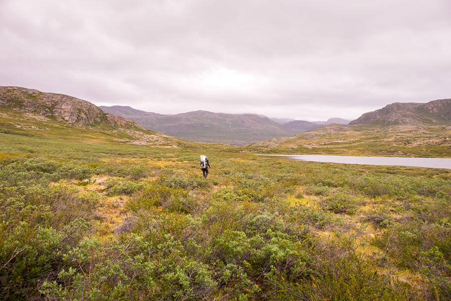 Bush-bashing in the general direction of Kangerlusarsuk Tulleq Nord Hut - Arctic Circle Trail - West Greenland