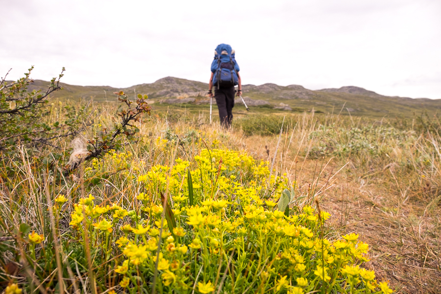 Hiking-Greenland-Arctic-Circle-Trail-hiker-flowers.jpg