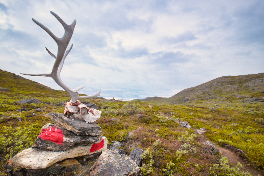 Reindeer skull sitting atop a stone cairn marked with the red half-circle indicating the Arctic Circle Trail. The trail runs beside.  Near Kangerlussuaq, West Greenland.