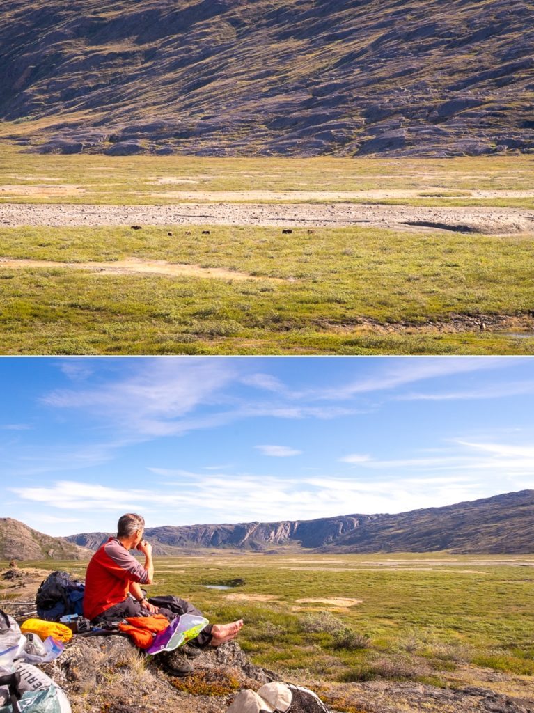 Musk Oxen and Rob eating lunch at Ole's Lakseelv (Itinneq) Valley - Arctic Circle Trail - West Greenland