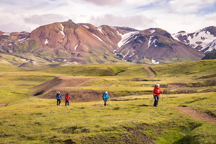 Hiking through green vegetation on Day 3 - Laugavegur Trail - Icelandic Highlands