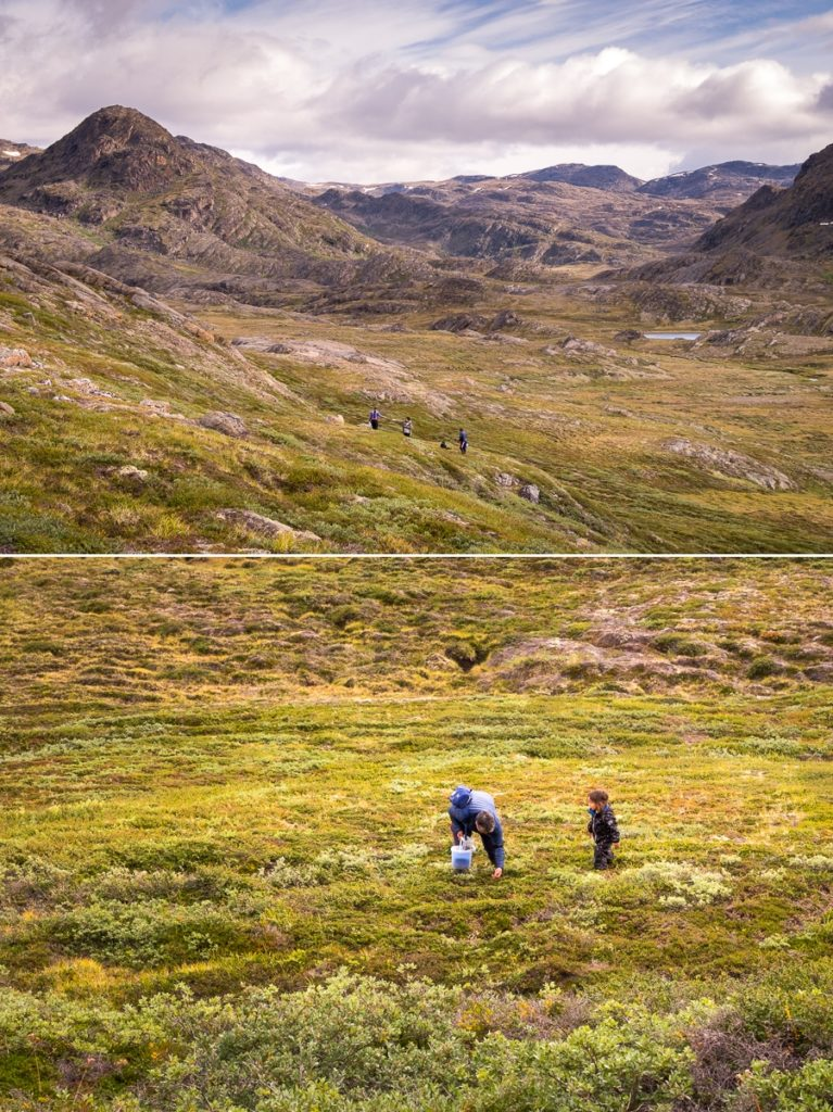 Locals collecting crowberries -  Sisimiut UFO hike - West Greenland