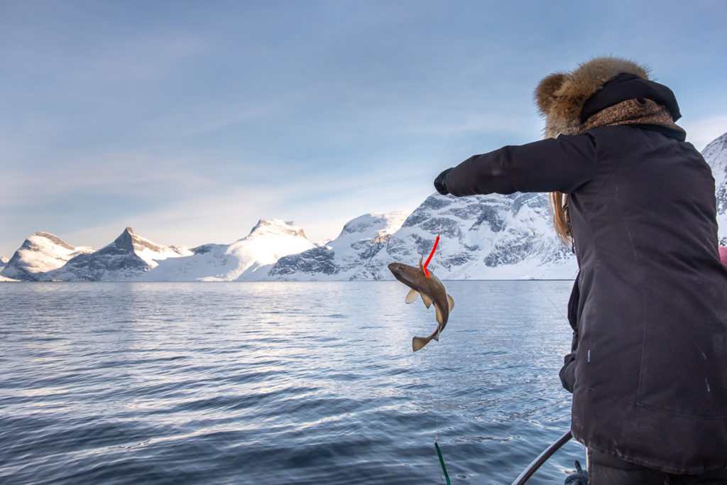 Person catching a fish on the Nuuk Fjord Safari - West Greenland
