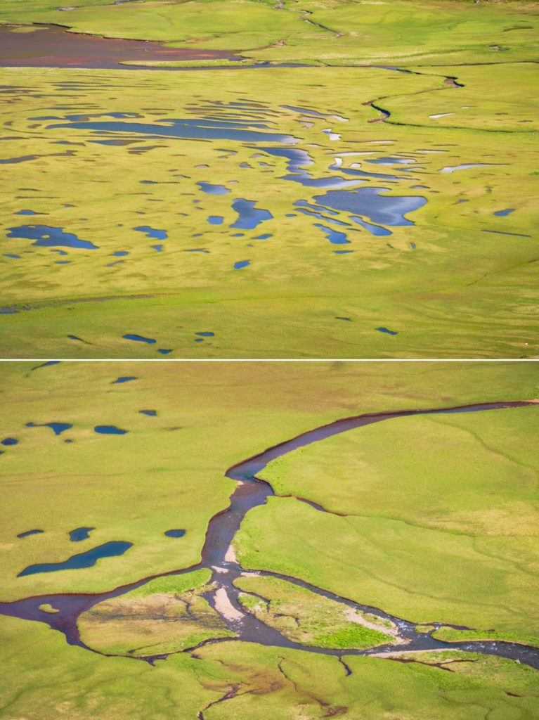 Water patterns in the green of the Hornvík river delta - Hornstrandir - Iceland