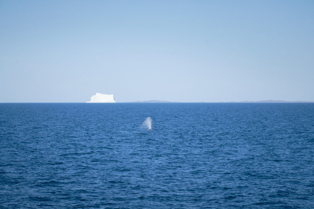 Disko Bay home to whales in the summer  - Sarfaq Ittuk - West Greenland