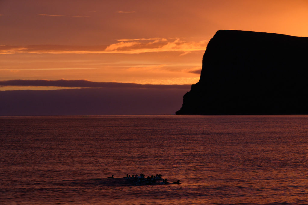 After midnight sunset at Hornvík campsite - Hornstrandir - Iceland
