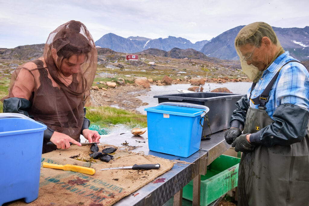 cleaning mussels at Sassannguit - Sisimiut - Greenland