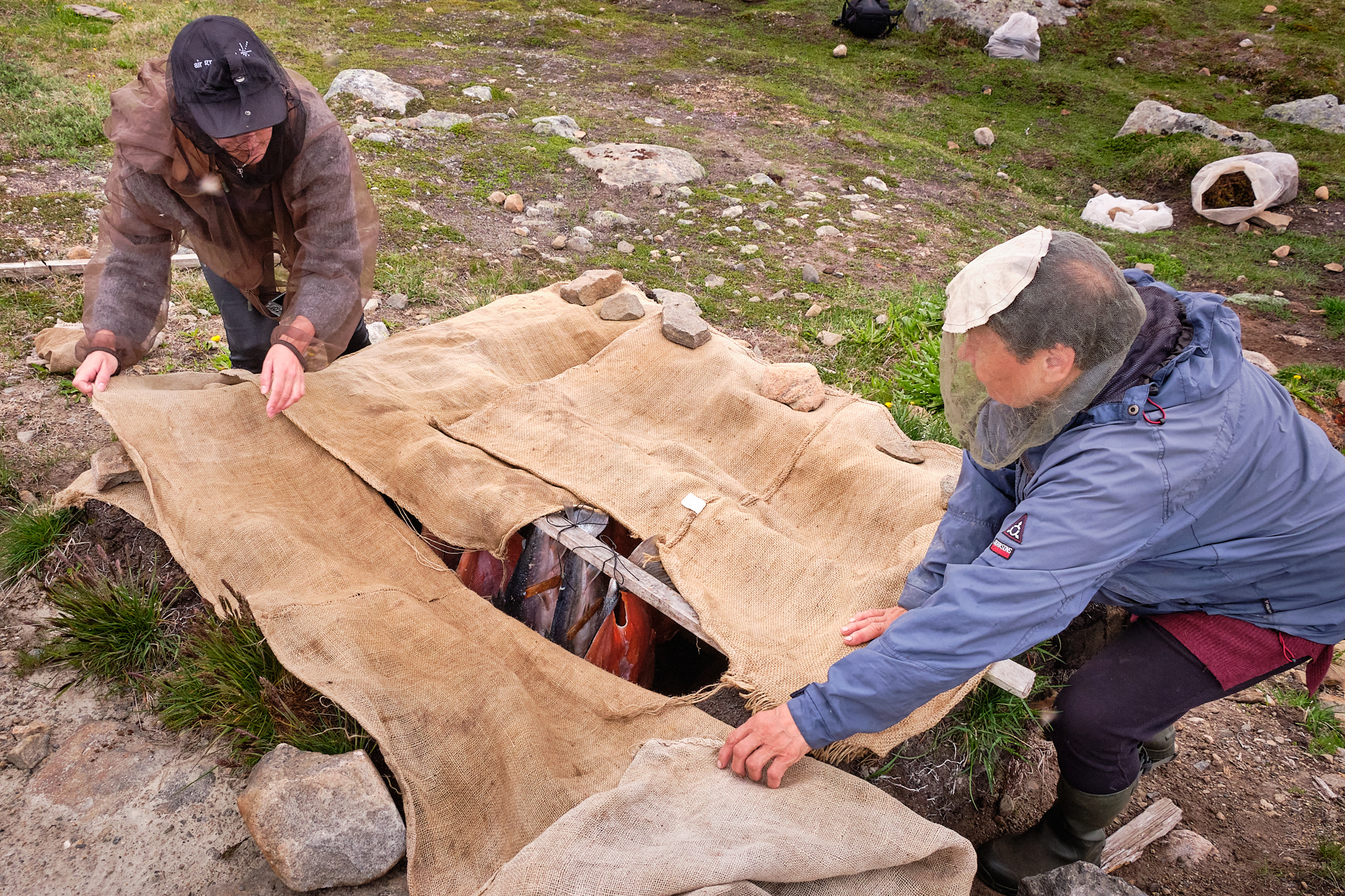 covering the fish in the smoking pit - Sassannguit - Greenland