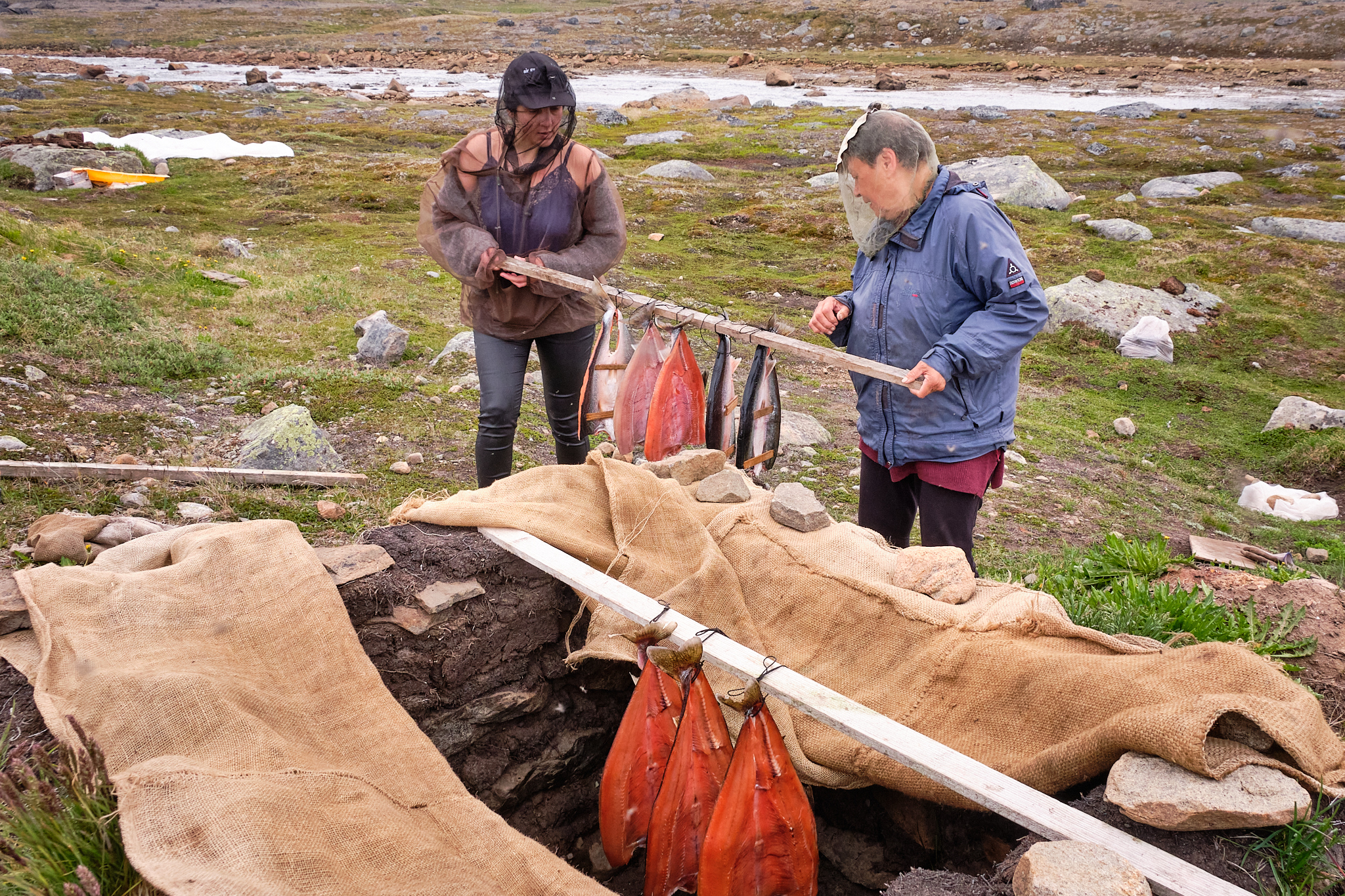 transporting the fish to the smoking pit - Sassannguit - Greenland